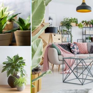 eco friendly interior design trends